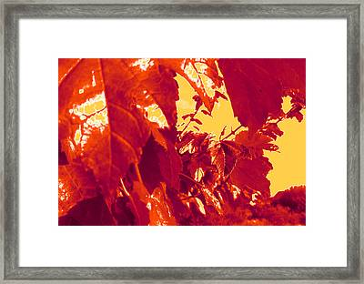 Fall Leaves #13 Framed Print