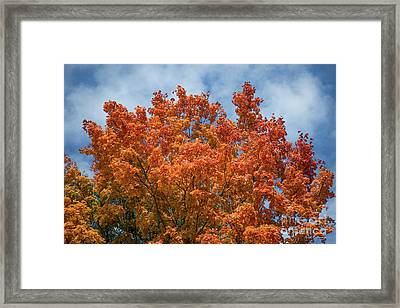 Fall Leaves 15 Autumn Leaf Colors Art Framed Print