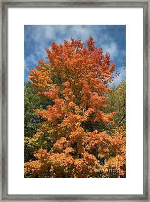 Fall Leaves 16 Autumn Leaf Colors Art Framed Print