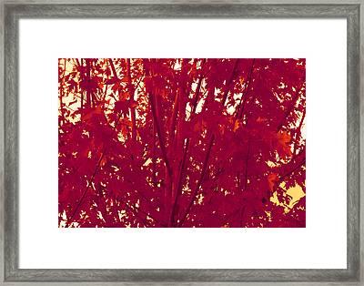 Fall Leaves #2 Framed Print