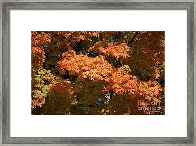Fall Leaves 3 Autumn Leaf Colors Art Framed Print