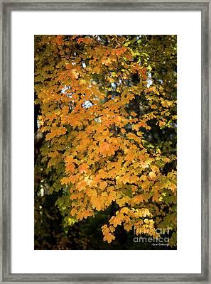 Fall Leaves 2 Autumn Leaf Colors Art Framed Print