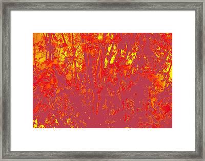 Fall Leaves #4 Framed Print