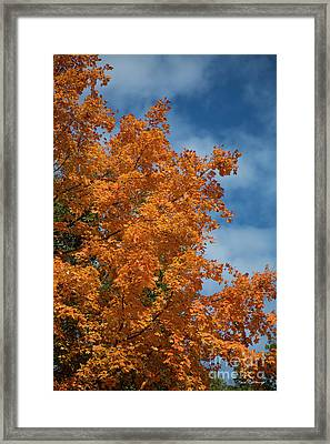 Fall Leaves 6 Autumn Leaf Colors Art Framed Print