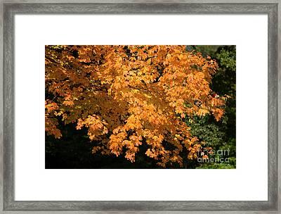 Fall Leaves 8 Autumn Leaf Colors Art Framed Print