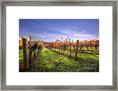 Fall Leaves At The Vineyard Framed Print by Jon Neidert