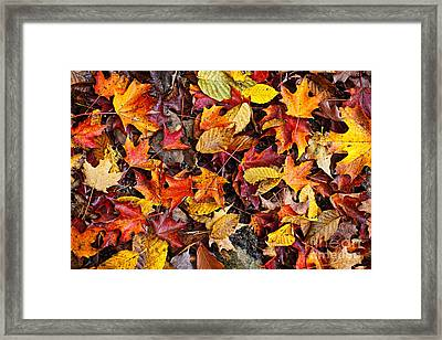 Fall Leaves On Forest Floor Framed Print