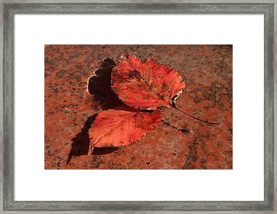 Fall Leaves Floating Framed Print