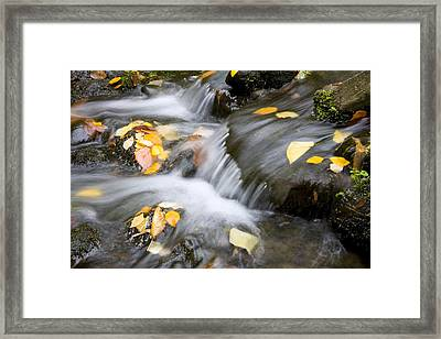 Fall Leaves In Rushing Water Framed Print by Craig Tuttle