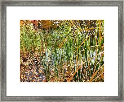 Fall Leaves In The Water 2 Framed Print by Lanjee Chee