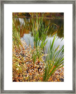 Fall Leaves In The Water 6 Framed Print by Lanjee Chee
