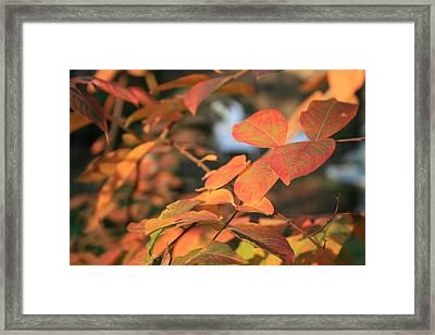 Fall Leaves Framed Print by Linda Ebarb