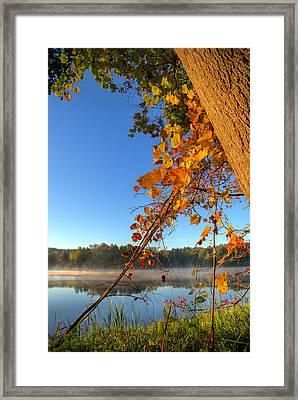 Fall Leaves Framed Print by Mark Hammerstein