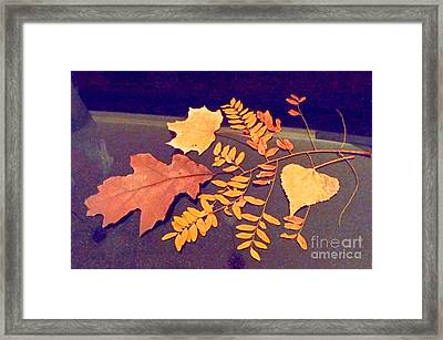 Fall Leaves On Granite Counter Framed Print by Annie Gibbons