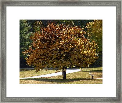 Fall Leaves Framed Print by Steven Michael