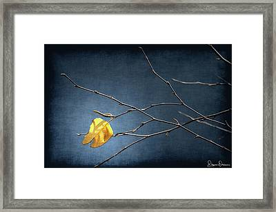 Fall Leaves Study 2 - Last Leaf - Signed Limited Edition Framed Print