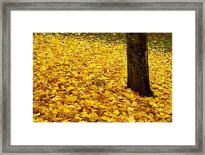 Fall Leaves Framed Print by Val Jolley