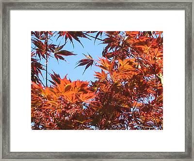 Fall Leaves Framed Print by Valerie Josi