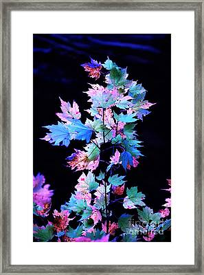 Fall Leaves1 Framed Print