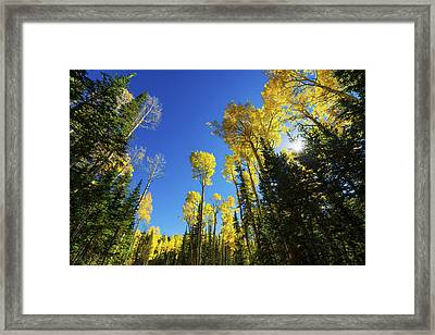 Fall Light Framed Print by Chad Dutson