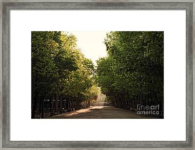 Fall Lights In Jardin Luxembourg Framed Print by Ivy Ho