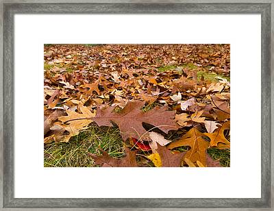 Framed Print featuring the photograph Fall by Lora Lee Chapman