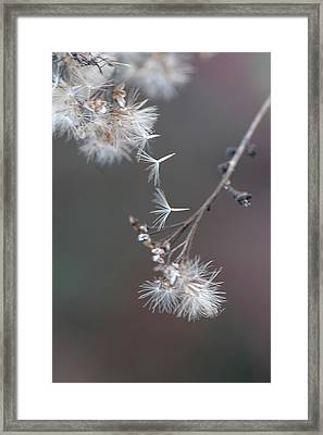 Framed Print featuring the photograph Fall - Macro by Jeff Burgess