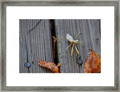 Fall Mantis  Framed Print