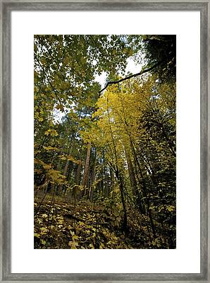 Fall Maple In Yosemite Framed Print by Chris Brewington Photography LLC