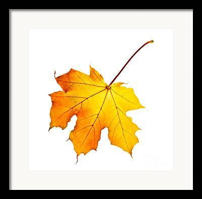 Red Maple Leaves Framed Prints