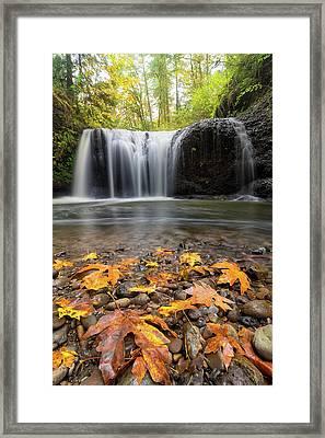 Fall Maple Leaves At Hidden Falls Framed Print