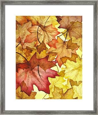 Fall Maple Leaves Framed Print by Christina Meeusen