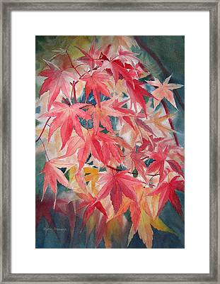 Fall Maple Leaves Framed Print by Sharon Freeman