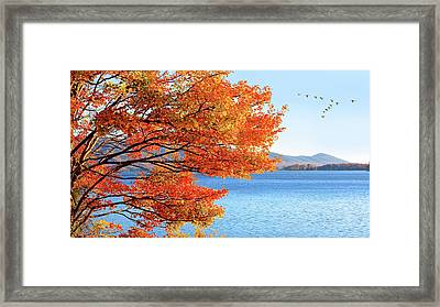 Fall Maple Tree Graces Smith Mountain Lake, Va Framed Print
