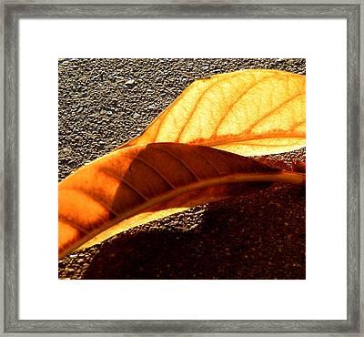 Fall Framed Print by Mark Stevenson