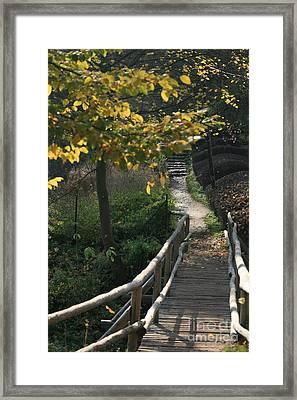 Fall Framed Print by Marta Grabska-Press