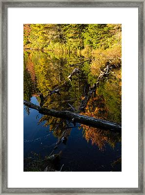 Fall Mirror - Mesmerizing Forest Lake Reflections Framed Print