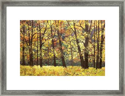 Fall Oaks In El Capitan Meadow Yosemite National Park Framed Print by Connie Tom