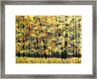 Fall Oaks In Yosemite Framed Print by Connie Tom