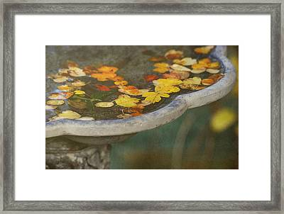Fall Offering Framed Print by Rebecca Cozart