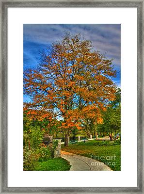 Fall On The Walk Framed Print