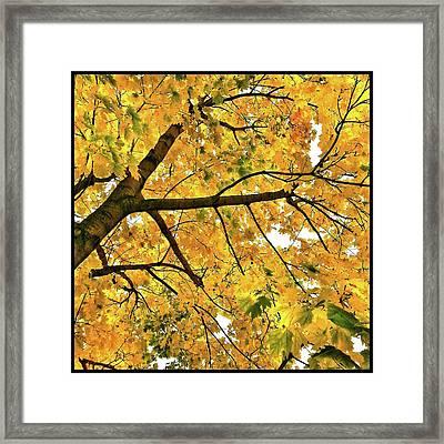 Fall On William Street Framed Print