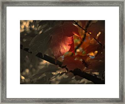 Fall Or Not Framed Print