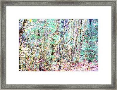 Fall Oregon Forest Framed Print