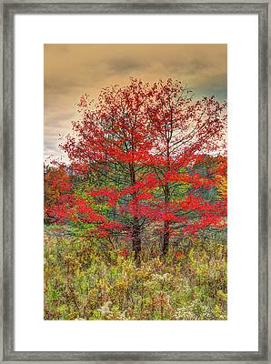 Fall Painting Framed Print