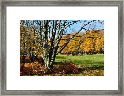 Fall Pasture Framed Print
