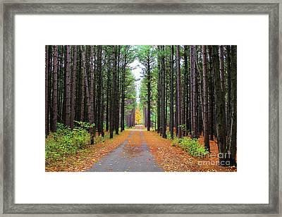 Fall Pines Road Framed Print