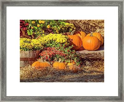Fall Pumpkins Framed Print by Carolyn Marshall