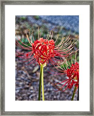 Fall Radiance Framed Print