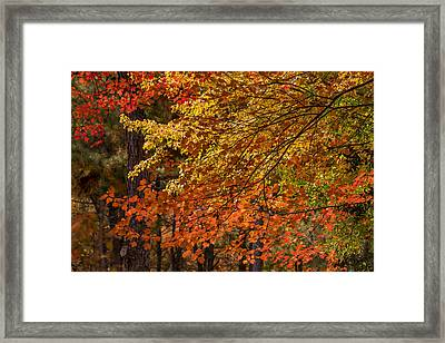 Fall Rainbow Of Colors Framed Print
